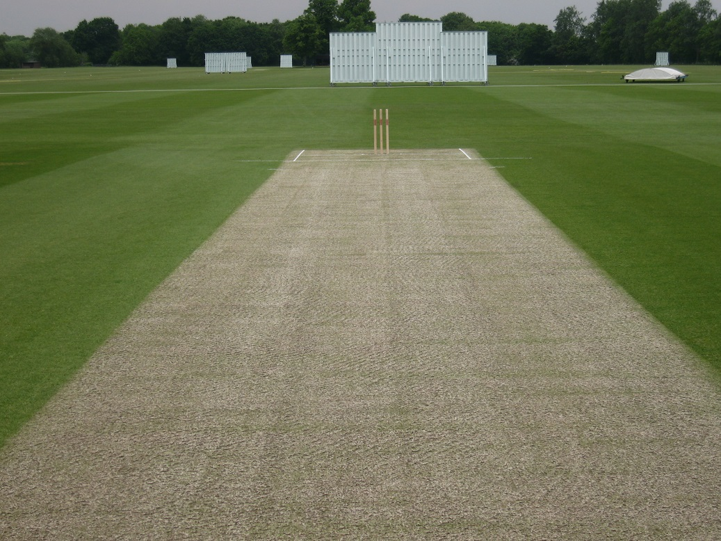 cricket-pitch